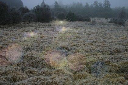 """Julie Navarro, """"Gifts of rain II"""", (préfiguration de l'illumination de la tourbière), 2014"""