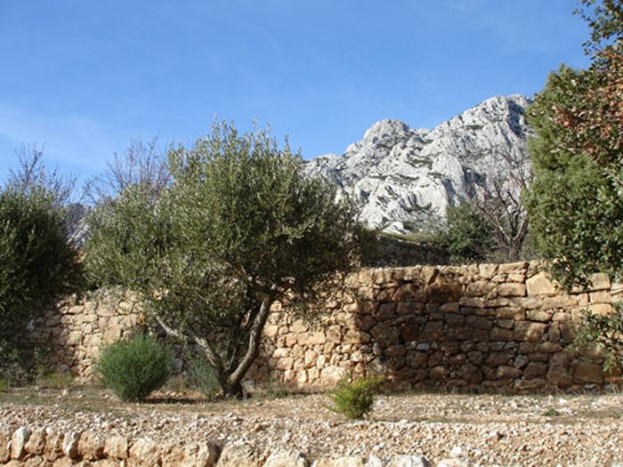 Domaine de Saint Ser : oliviers en terrasse