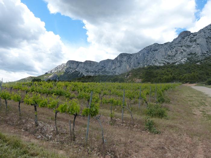 Domaine de Saint Ser : le vignoble devant la Ste Victoire