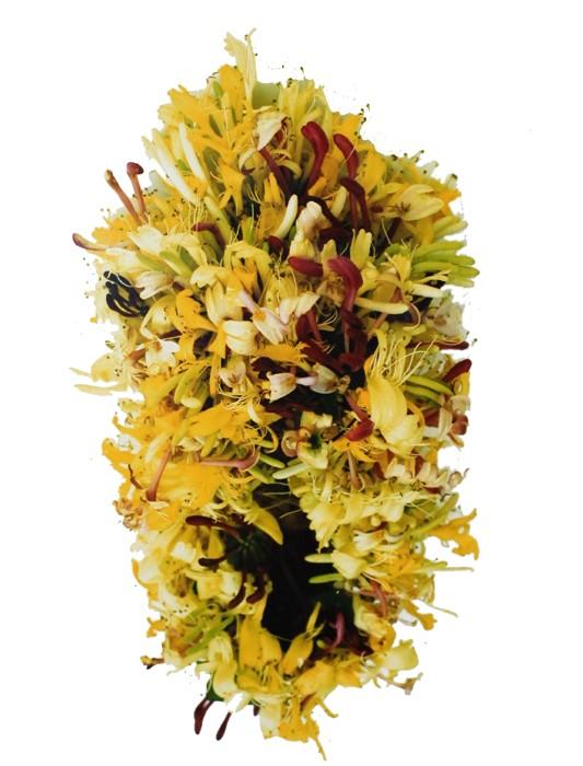 Sumiko Kai, fleurs jaunes